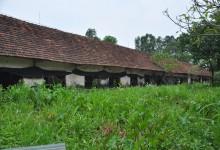 Khu chuồng lợn rừng