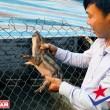 công tác thú y cho lợn rừng