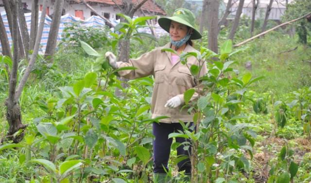 khu trồng cây thuốc nam nuôi lợn rừng
