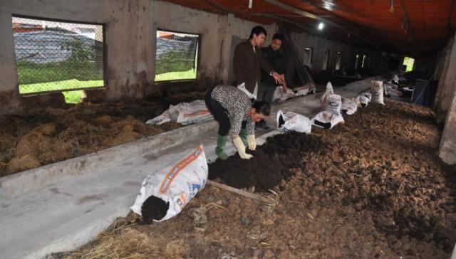 Khu nuôi giun quế cho lợn rừng