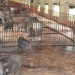 Khu nuôi lợn rừng nái